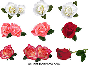 Nine beautiful roses on a white background. Vector.
