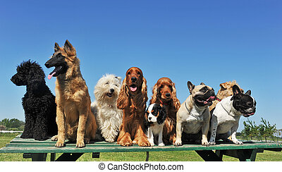 nine dogs - group of puppies purebred dogs on a table