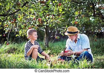 nipote, frutteto, apple., seduta, nonno, taglio, anziano, erba