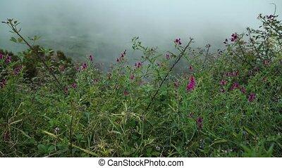 niveau, montagnes, wildflowers, nuage, croissant, lilas