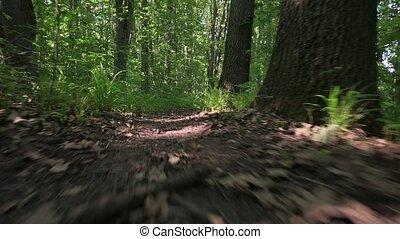 niveau, vert, perspective, terrestre, forêt, sentier, marche