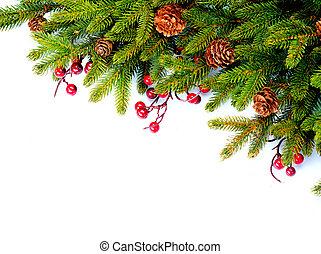 noël, arbre feuilles persistantes, frontière, design., isolé, blanc