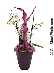 noël, orchidée