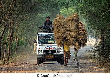 no identificado, granja, lleva, granjero, hogar, arroz