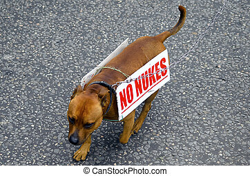 no nuke, protest by dog