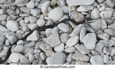 No poisonous snake crawls on the rocks. Snakes are part of the ecological system needed to maintain balance. The negative creation is writhing on the floor