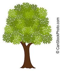 noble, árbol
