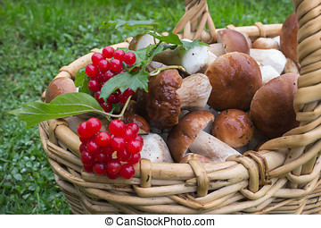 Noble white mushrooms in basket and berries of viburnum