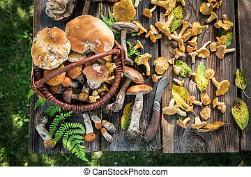 Noble wild mushrooms on old wooden rustic table