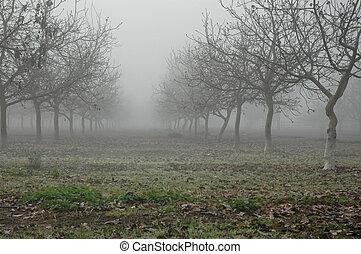 noce, albero, in, nebbia