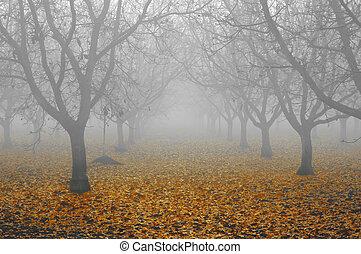 noce, boschetto, in, nebbia