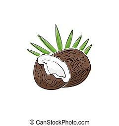 noce di cocco, bianco, isolato