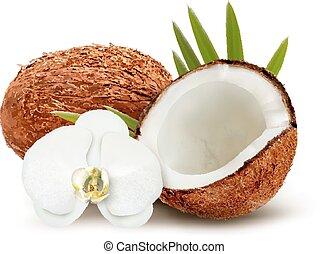 noce di cocco, con, foglie, e, bianco, flower., vector.