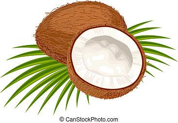 noce di cocco, con, foglie, su, uno, bianco, fondo.