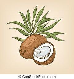 noce di cocco, con, leaves., vettore, illustration.