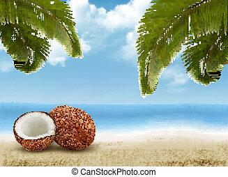 noce di cocco, con, palma, leaves., vacanza estate, fondo., vector.