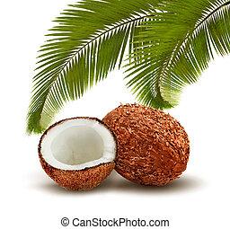 noce di cocco, con, palma, leaves., vector.