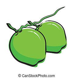 noce di cocco, disegno
