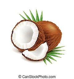 noce di cocco, e, fetta, isolato, bianco, vettore