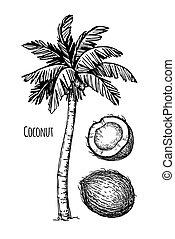 noce di cocco, e, palma