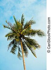 noce di cocco, foglie, su, cielo blu, fondo