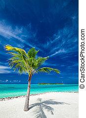 noce di cocco, pezzo fuso, albero, tropicale, singolo, palma, uggia, spiaggia
