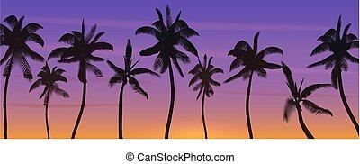noce di cocco, silhouette, illustration., bandiera, sunrise., albero, realistico, vettore, palma, tramonto, paradise., spiaggia, o