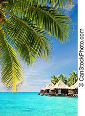 noce di cocco, sopra, bungalow, albero, oceano, foglie palmo