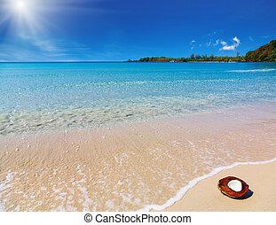 noce di cocco, spiaggia