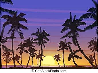 noce di cocco, spiaggia., silhouette, illustration., sunrise., albero, o, realistico, vettore, palma, paradiso, terra, tramonto