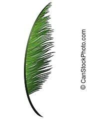 noce di cocco, tropicale, realistico, verde, ramo, palma