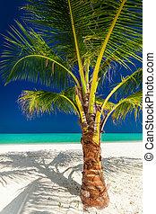 noce di cocco, vibrante, albero, tropicale, singolo, palma, spiaggia bianca