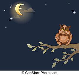 noche, búho