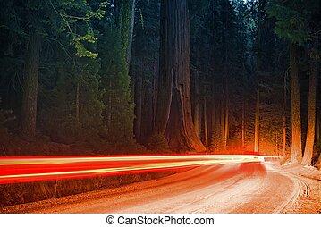 noche, bosque, tráfico
