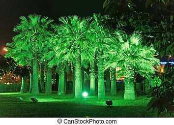 noche, iluminación, en el estacionamiento, riviera, sochi,...