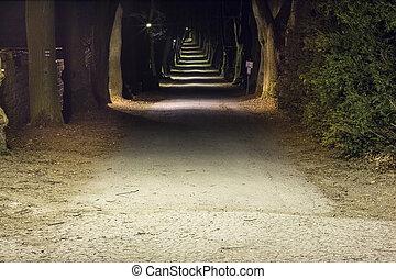 noche, parque, con, callejón, tarde, otoño