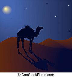 noche, vector, desierto, camello