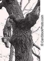 nodoso, foresta, albero