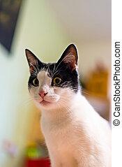 noir blanc, chat maison, fixe, a, point