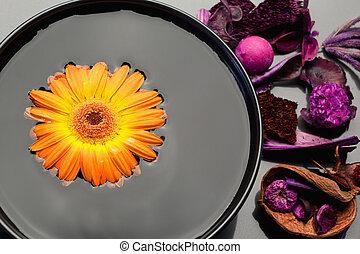 noir, bol, fleurs, gerbera, orange, pourpre, flotter, sec