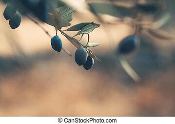 noir, branche, olives