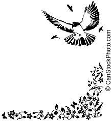 noir, colombe