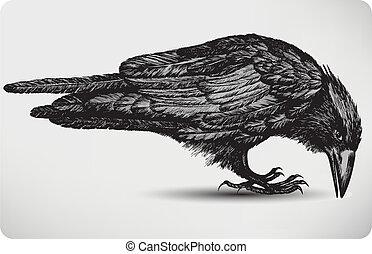 noir, corbeau, oiseau, hand-drawing., vecteur, illustration.