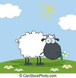 noir, dessin animé, mouton, caractère