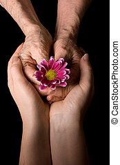 noir, fleur, mains vieilles