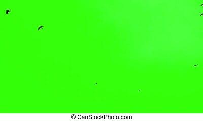 noir, oiseaux, vert, écran