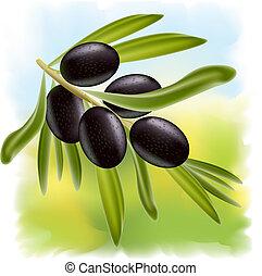 noir, olives., branche