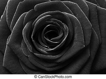 noir, rose