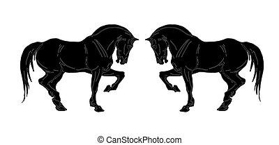 noir, silhouettes, deux, étalons