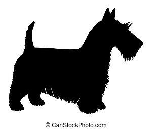 noir, terrier, silhouette, écossais